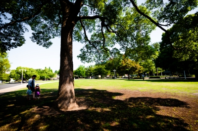 soku_33058.jpg :: 風景 街並み 公園 大木