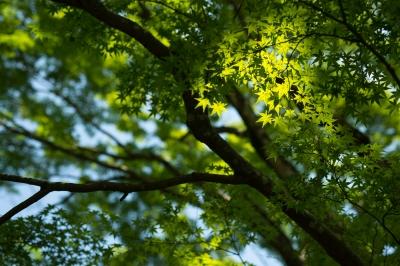 soku_33125.jpg :: 風景 自然 紅葉 植物 草葉 緑
