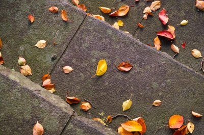 soku_33152.jpg :: 風景 自然 紅葉 落ち葉
