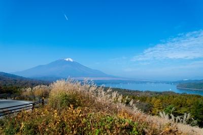 soku_33153.jpg :: 風景 自然 秋 すすき