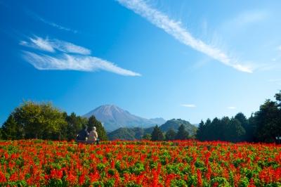 soku_33161.jpg :: 風景 自然 草原 花畑 植物 花 彼岸花 ヒガンバナ
