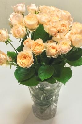 soku_33163.jpg :: 植物 花 ピンクの花