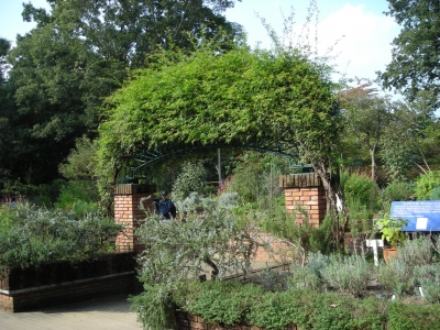 soku_33165.jpg :: ガーデニング 植物 樹木 庭木