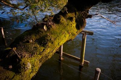 soku_33188.jpg :: 植物 その他 苔 コケ 水辺