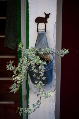 soku_33192.jpg :: 植物 花 植木鉢 洋風