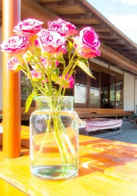 soku_33219.jpg :: 植物 花 ピンクの花 ハイキー
