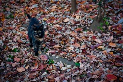 soku_33228.jpg :: 動物 哺乳類 猫 ネコ