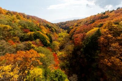 soku_33234.jpg :: 風景 自然 森林 紅葉林