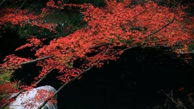 soku_33241.jpg :: 風景 自然 紅葉 奥津渓