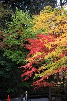 soku_33243.jpg :: 風景 自然 紅葉 奥津渓