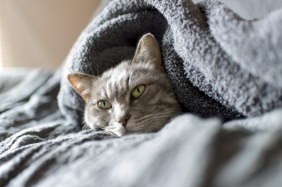 soku_33244.jpg :: 動物 哺乳類 猫 ネコ