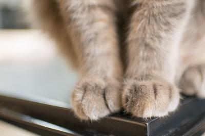 soku_33245.jpg :: 動物 哺乳類 猫 ネコ 手
