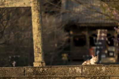 soku_33249.jpg :: 動物 哺乳類 猫 ネコ