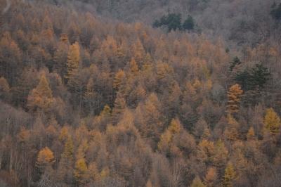 soku_33250.jpg :: 風景 自然 森林 紅葉林