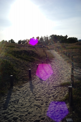 soku_33287.jpg :: 風景 自然 山 丘 逆光激弱レンズ