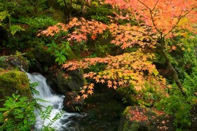 soku_33345.jpg :: 風景 自然 紅葉 川 渓谷