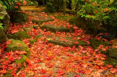 soku_33346.jpg :: 風景 自然 紅葉 赤い紅葉