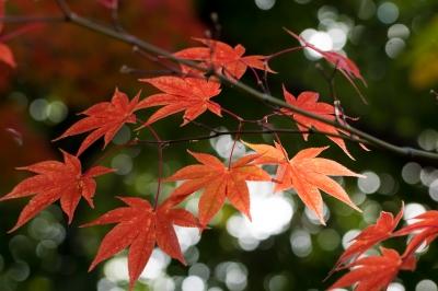soku_33347.jpg :: 風景 自然 紅葉