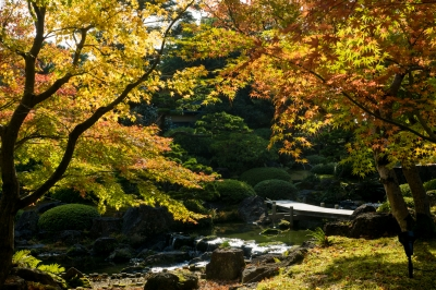 soku_33348.jpg :: 風景 自然 紅葉 黄色い紅葉
