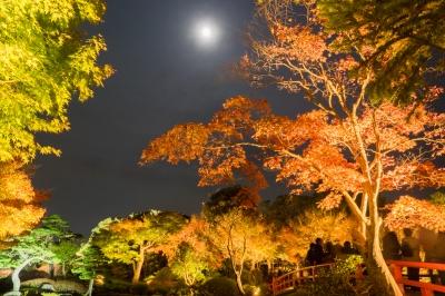 soku_33360.jpg :: 風景 自然 紅葉 色 光 ライトアップ 夜景