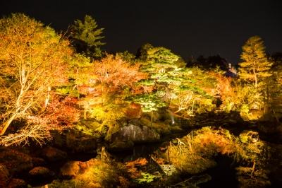 soku_33361.jpg :: 風景 自然 紅葉 色 光 ライトアップ 夜景