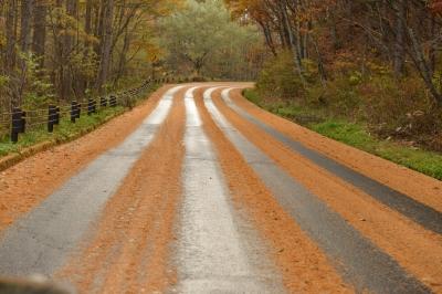 soku_33368.jpg :: 風景 自然 紅葉 黄色い紅葉 道路 轍