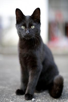 soku_33381.jpg :: 動物 哺乳類 猫 ネコ 野良猫 by Niigata