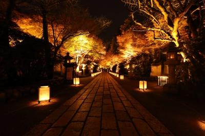 soku_33397.jpg :: 植物 樹木 街路樹 夜景 色 光 ライトアップ