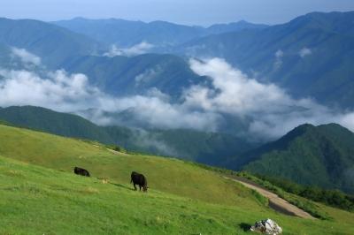 soku_33460.jpg :: 風景 自然 山 大地 放牧 動物 家畜 肉牛
