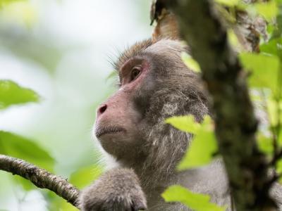 soku_33480.jpg :: 動物 哺乳類 猿 サル ニホンザル エテ公