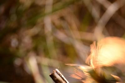 soku_33544.jpg :: 動物 鳥 野鳥 自然の鳥