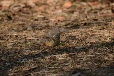 soku_33613.jpg :: 動物 鳥 野鳥 自然の鳥