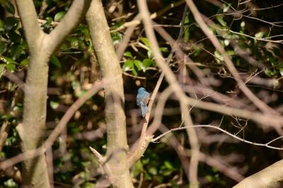 soku_33614.jpg :: 動物 鳥 野鳥 自然の鳥