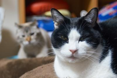 soku_33627.jpg :: ミノルタ24.85 F3.5.4.5 55mm 1/15 F4.5 ISO400 CaptureOne9で現像 動物 哺乳類 猫 ネコ