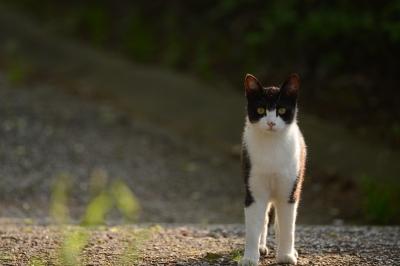 soku_33630.jpg :: 動物 哺乳類 猫 ネコ