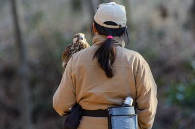 soku_33647.jpg :: 動物 鳥 猛禽類 鷹匠