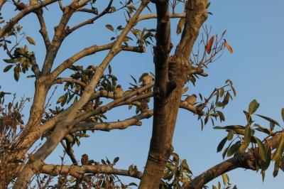 soku_33660.jpg :: 動物 鳥 雀 スズメ 鳥の巣 風景 自然 樹木