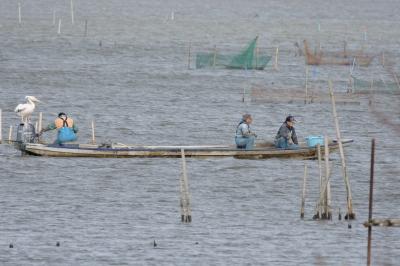 soku_33670.jpg :: 漁業 乗り物 交通 船 漁船 平船
