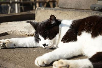 soku_33712.jpg :: にゃー 動物 哺乳類 猫 ネコ