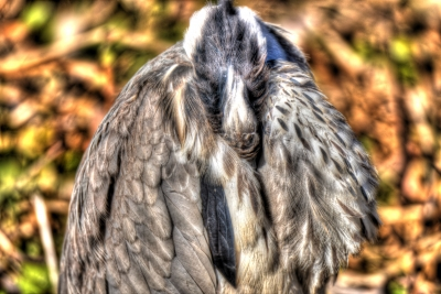 soku_33718.jpg :: 動物 鳥