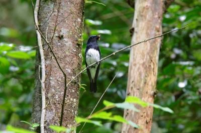 soku_33737.jpg :: 動物 鳥 野鳥 自然の鳥 未記入鳥 捕食