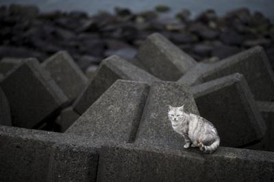soku_33749.jpg :: 動物 哺乳類 猫 ネコ テトラポット
