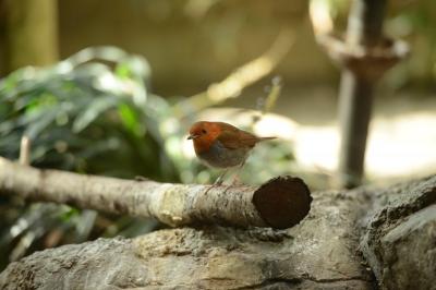 soku_33770.jpg :: 動物 鳥 野鳥 自然の鳥 未記入鳥