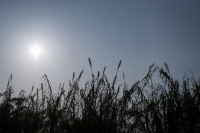 soku_33842.jpg :: 風景 自然 草原 逆光