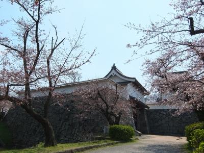 soku_33851.jpg :: 九州 福岡 さくらまつり 植物 花 桜 サクラ
