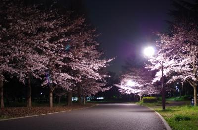 soku_33855.jpg :: 植物 花 桜 サクラ 夜桜