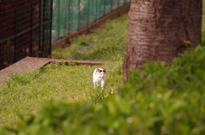 soku_33856.jpg :: 動物 哺乳類 猫 ネコ 野良猫