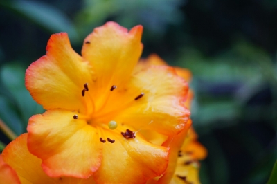 soku_33860.jpg :: 植物 花 オレンジ色の花