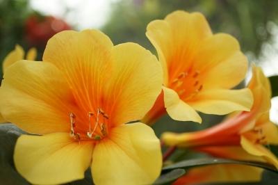 soku_33861.jpg :: 植物 花 黄色い花