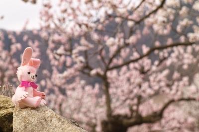 soku_33875.jpg :: 花 ぬいぐるみ 杏 あんず